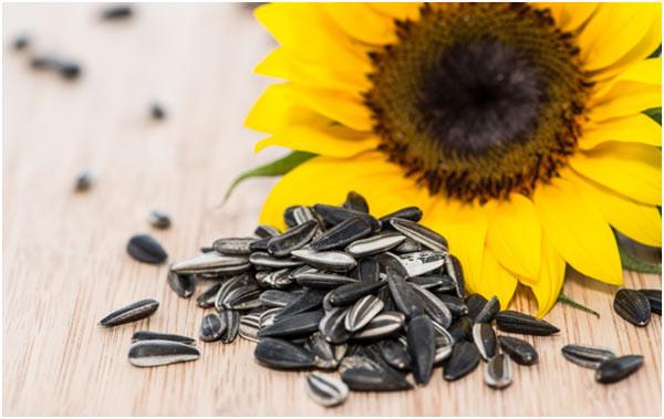 Có bầu ăn hạt hướng dương được không? Có lợi hay có hại?