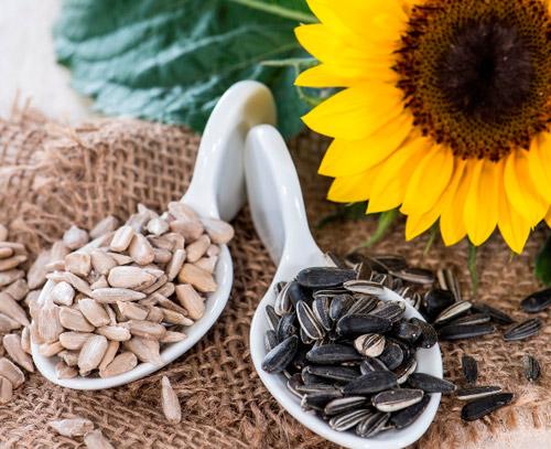Giá trị dinh dưỡng của hạt hướng dương